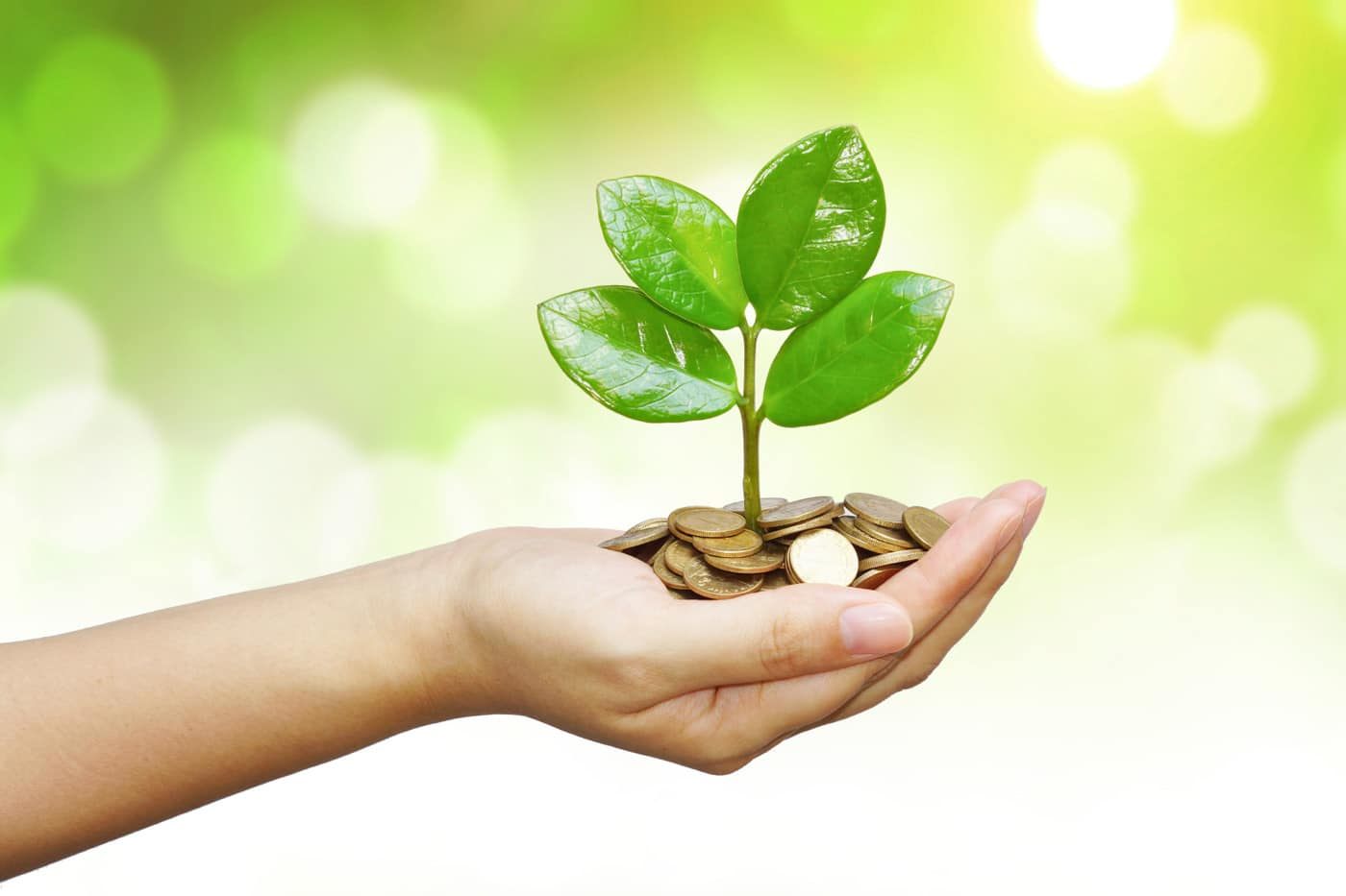 Stock photo of a hand holding a small plant that is growing out of coins