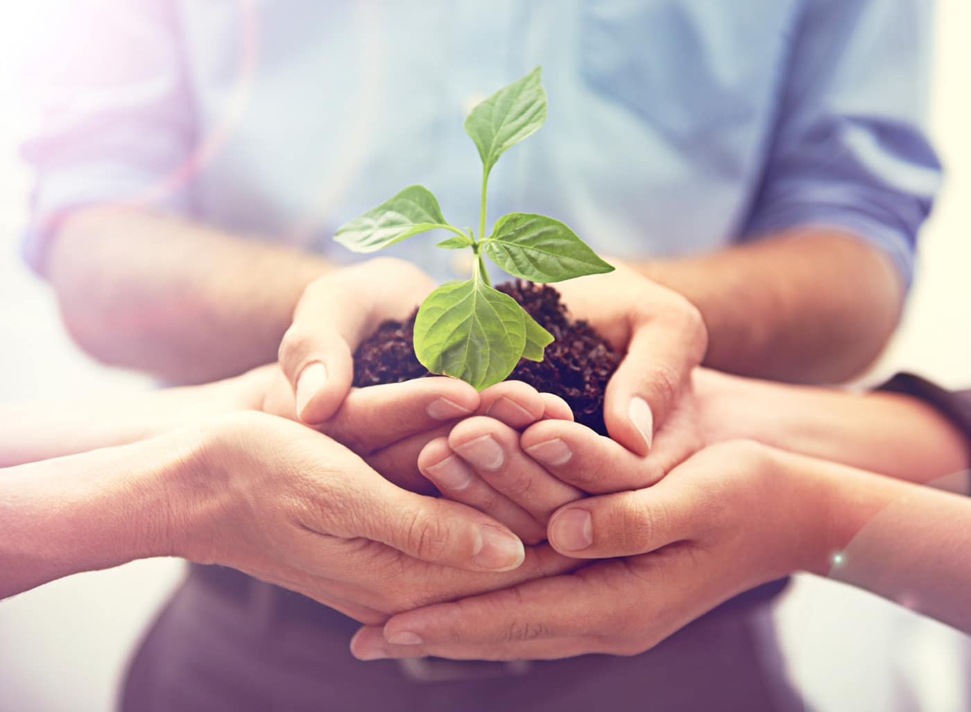 Stock image of hands holding a new plant that is in some dirt