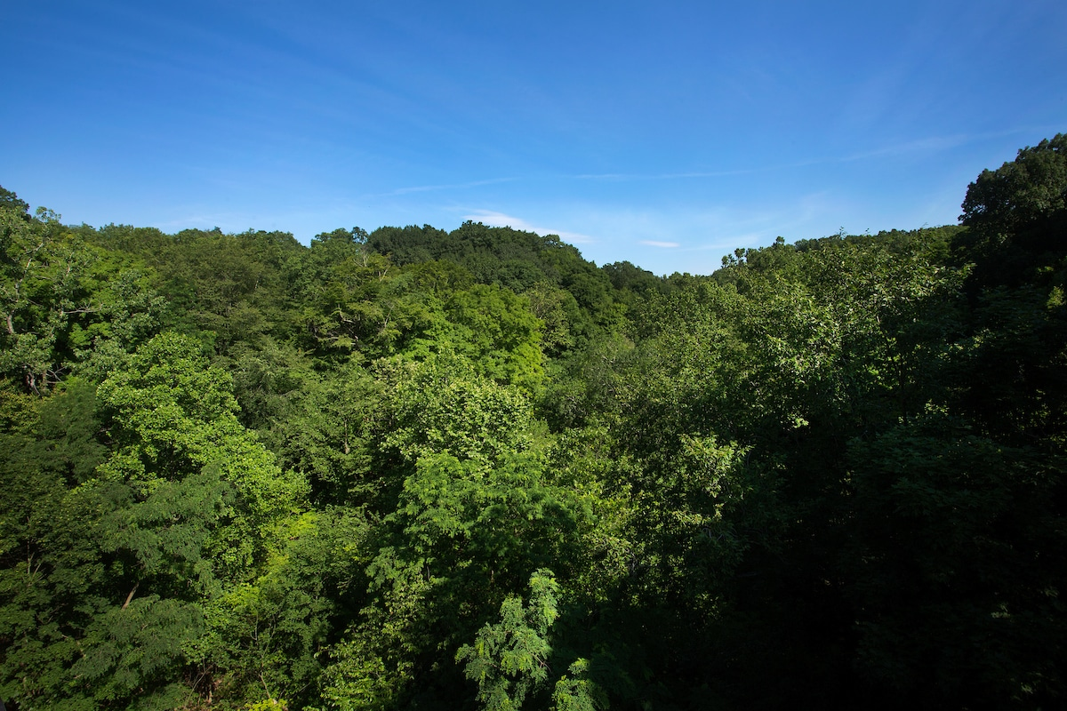 An image looking down on trees on a skyline