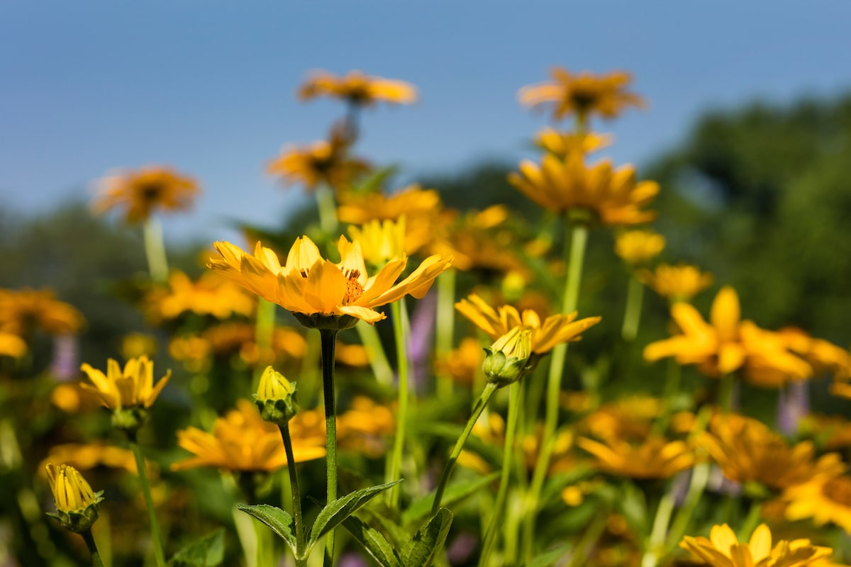 Perennial flowers in the spring time.