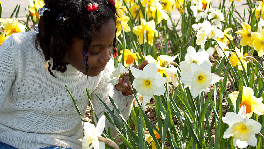 A young girl smelling flowers