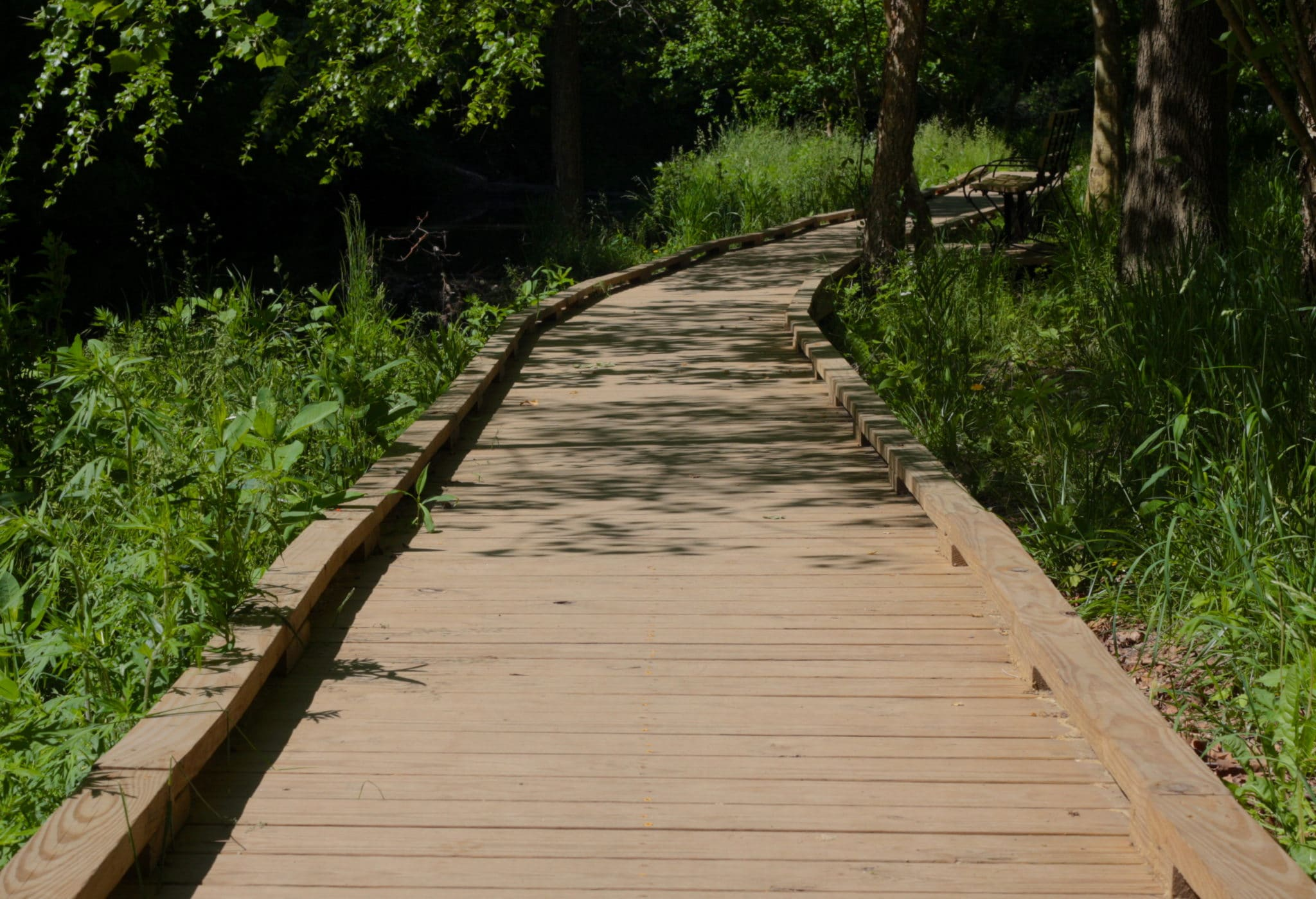 Wooden path with trees and grass