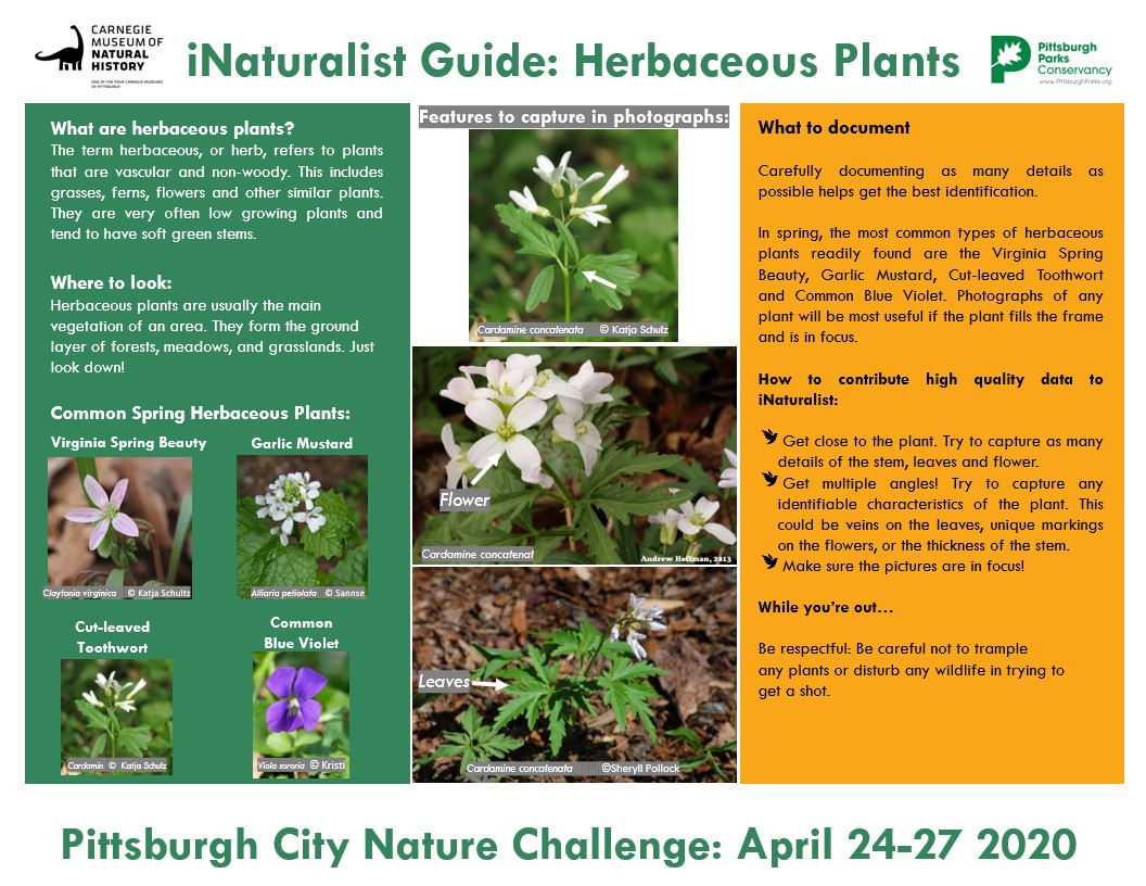 A guide to Herbaceous Plants