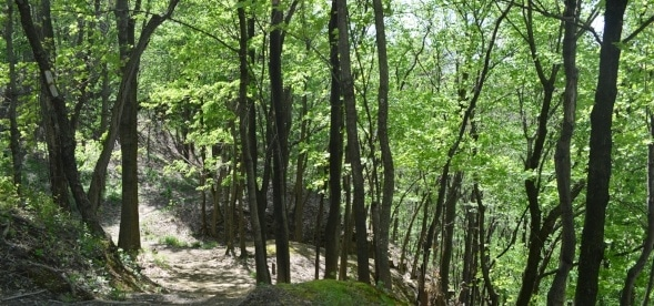A forest in the Spring