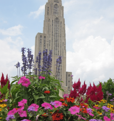 Schenley Plaza flowers in bloom looking up at Cathedral of Learning