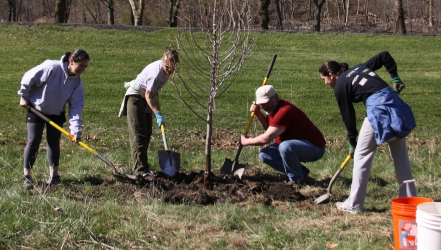 People planting trees in Highland Park
