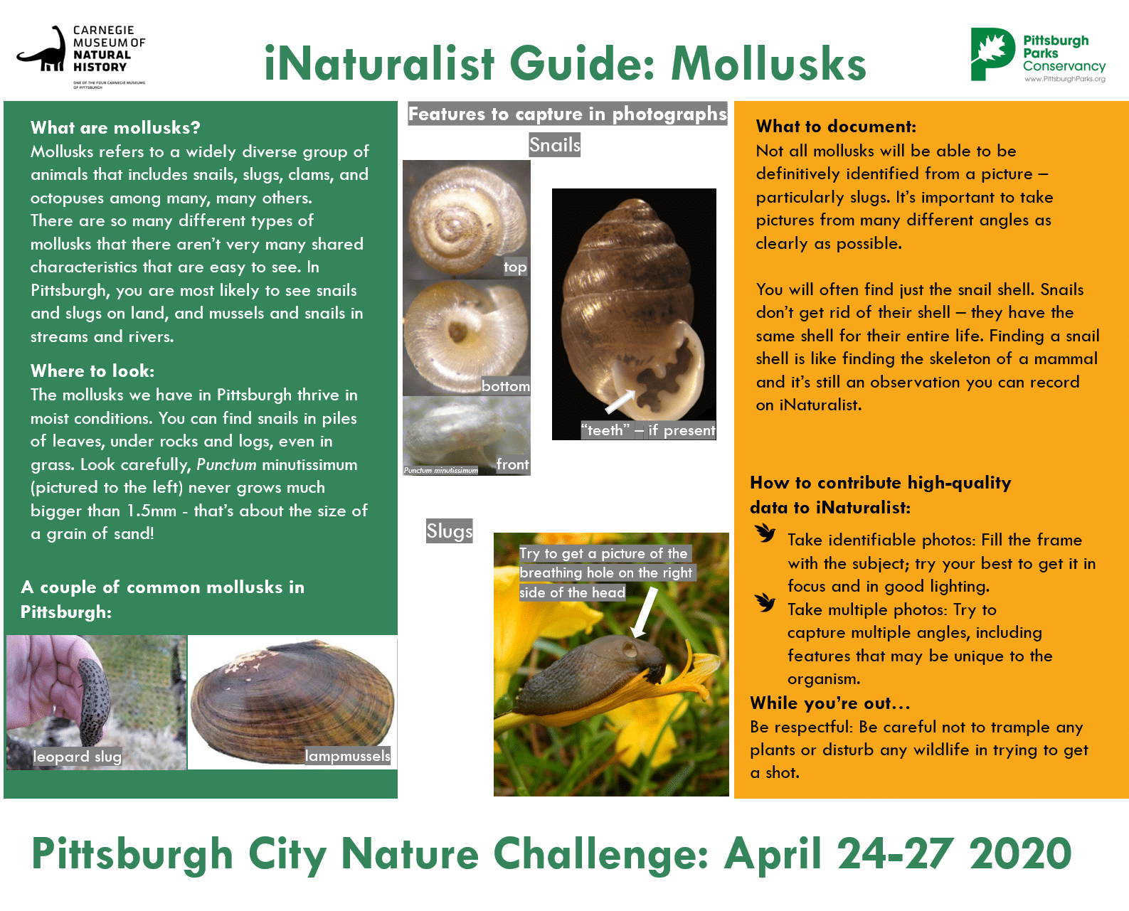 A guide to Mollusks