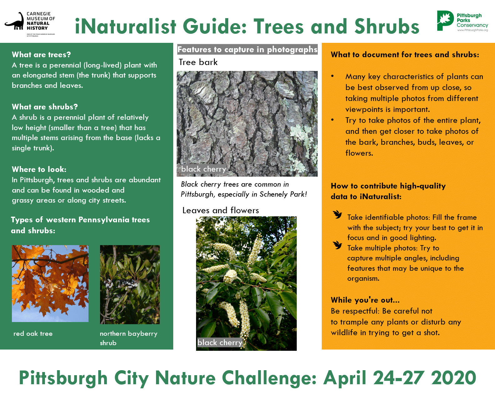 A guide to Trees and Shrubs