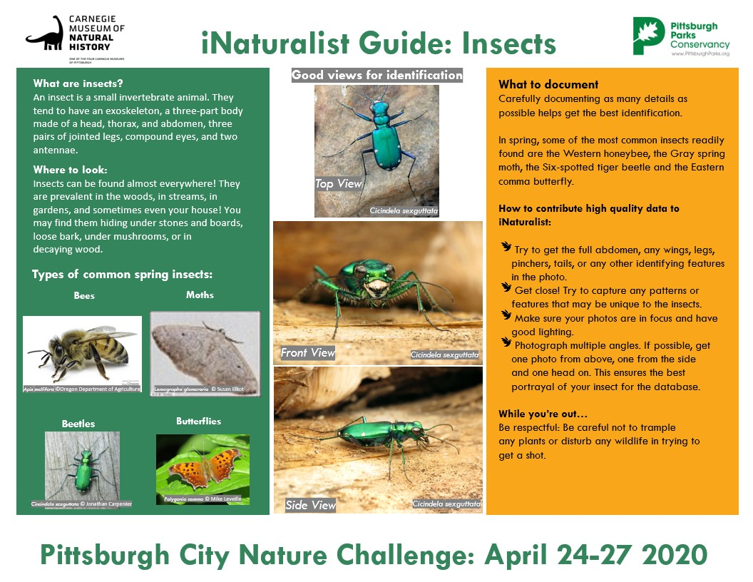 A guide to Insects