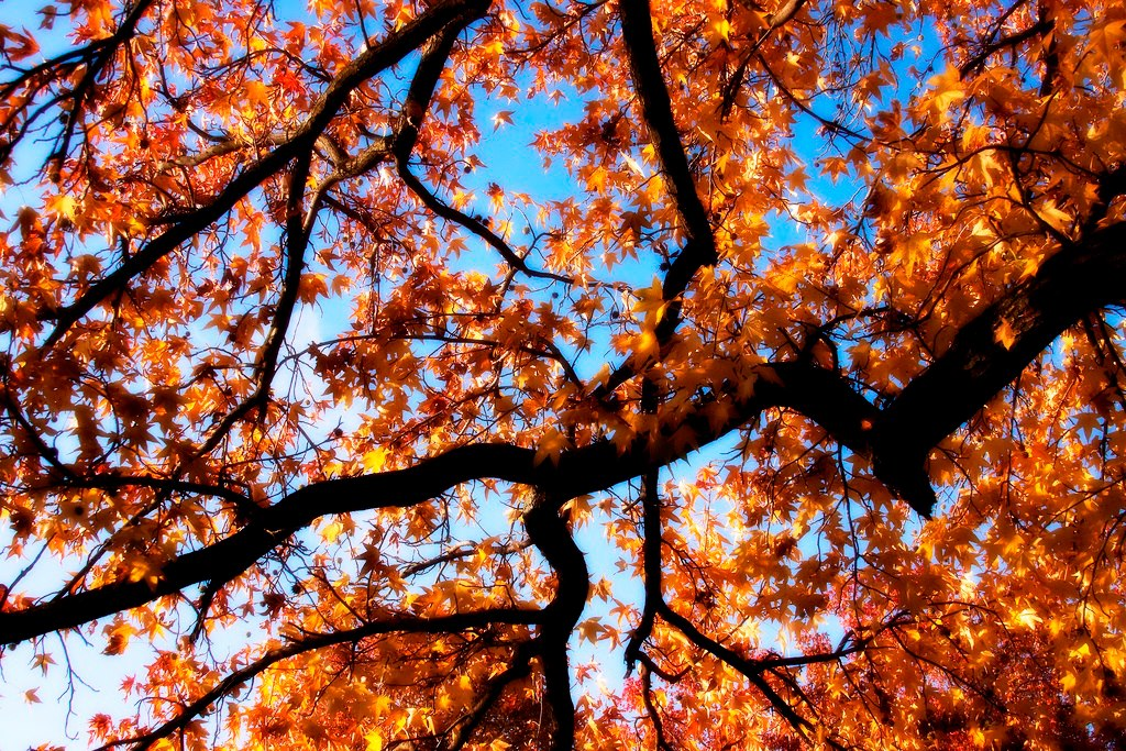 Tree branches with orange leaves against the sky