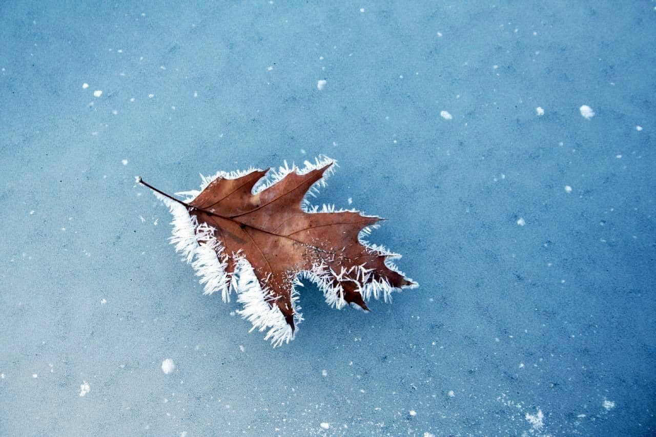 A leaf with frost on it