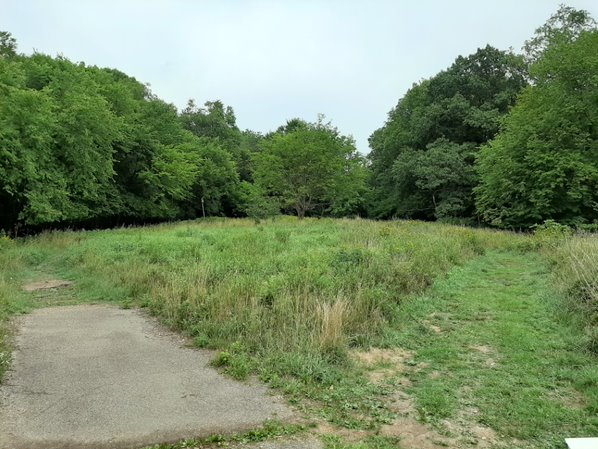 An image of a meadow and trees