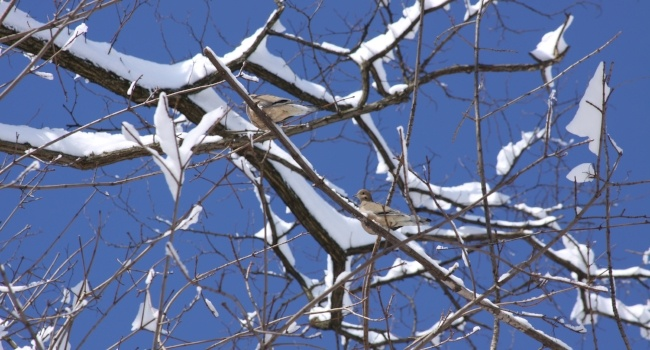Tree branches covered in snow against the sky