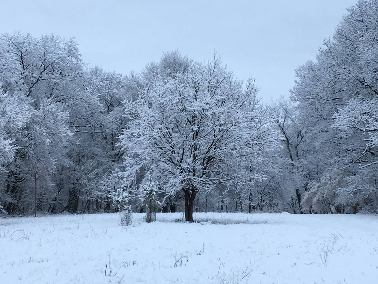 Tree covered with snow in a field