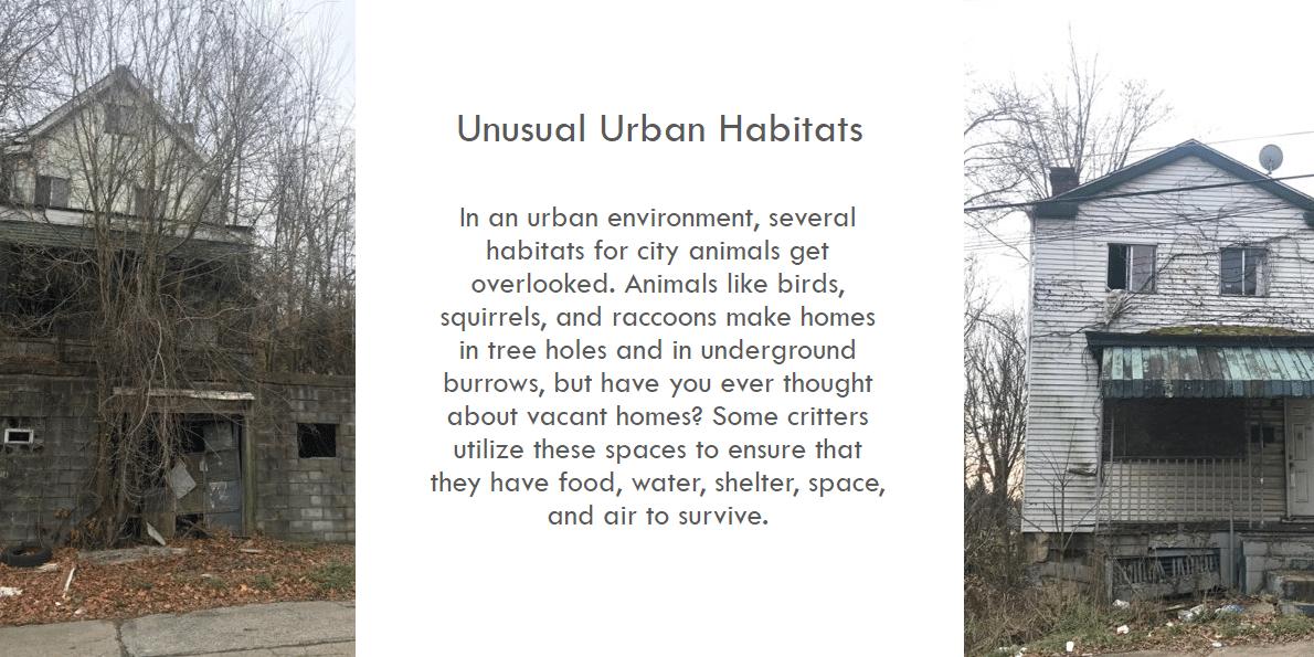 Unusual Urban Habitats graphic