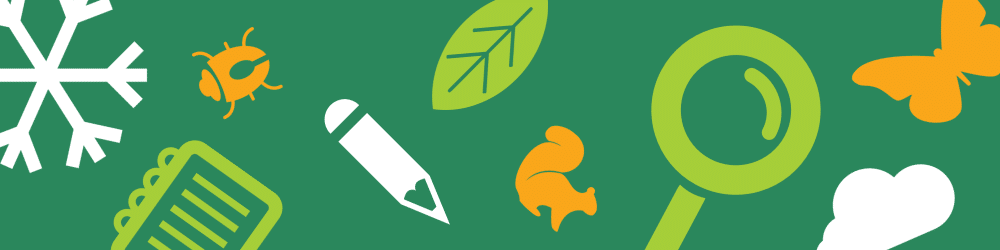 Banner with cartoon squirrel, butterfly, magnifying glass, and pencil