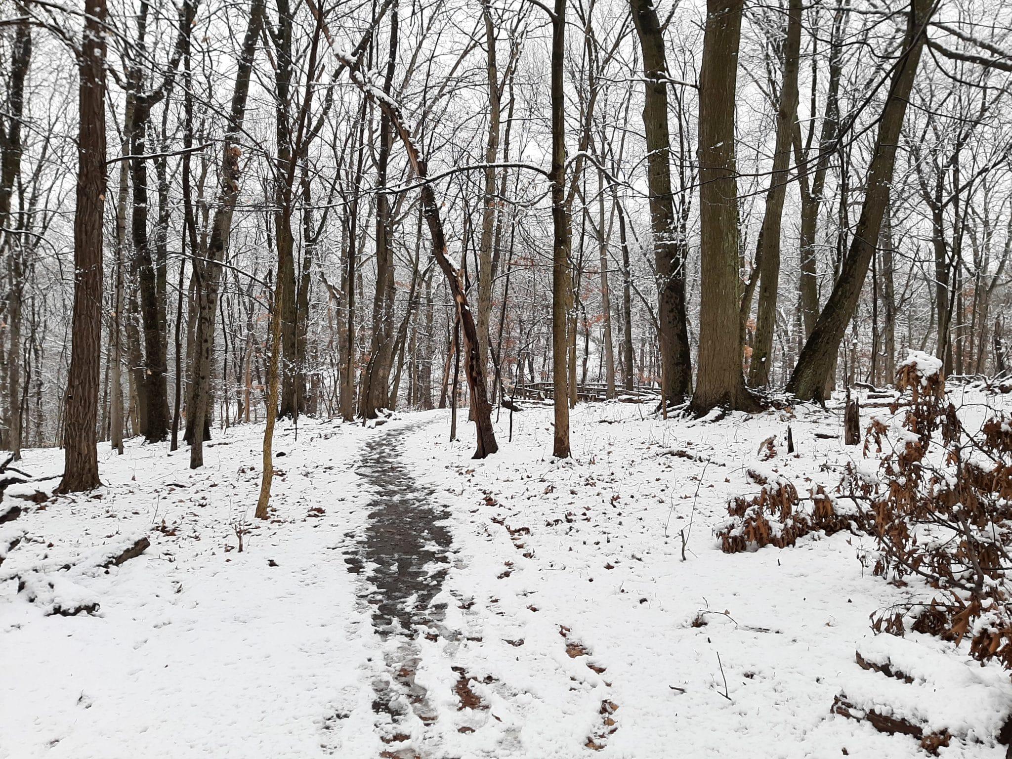Trees in winter snow