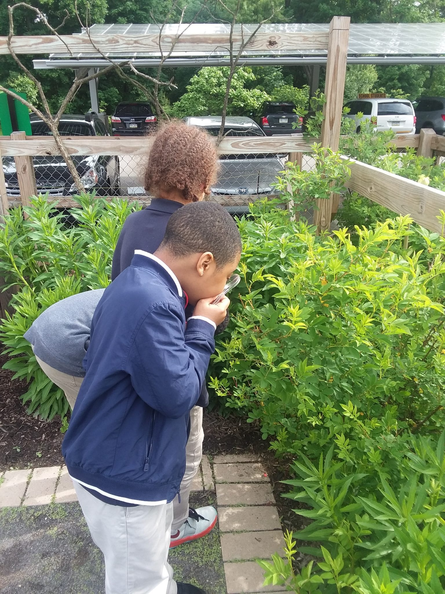 A child with a magnifying glass looking at plants