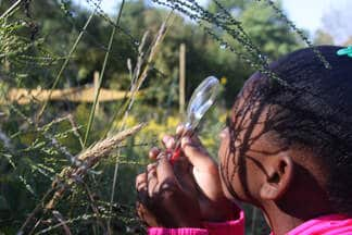 A child with a magnifying glass looking at a plant