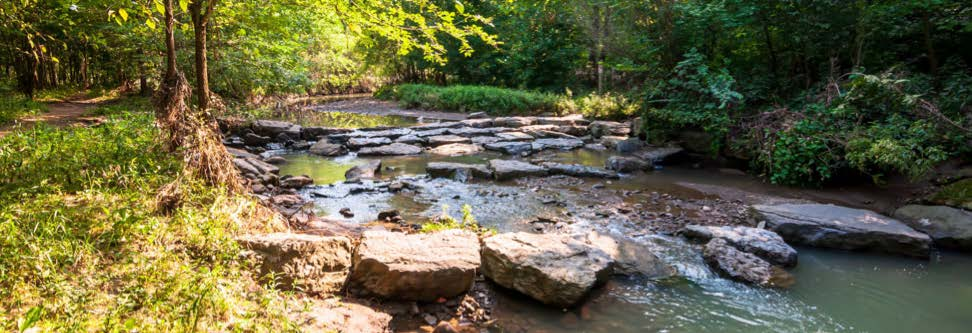 A water source flowing through Frick Park.