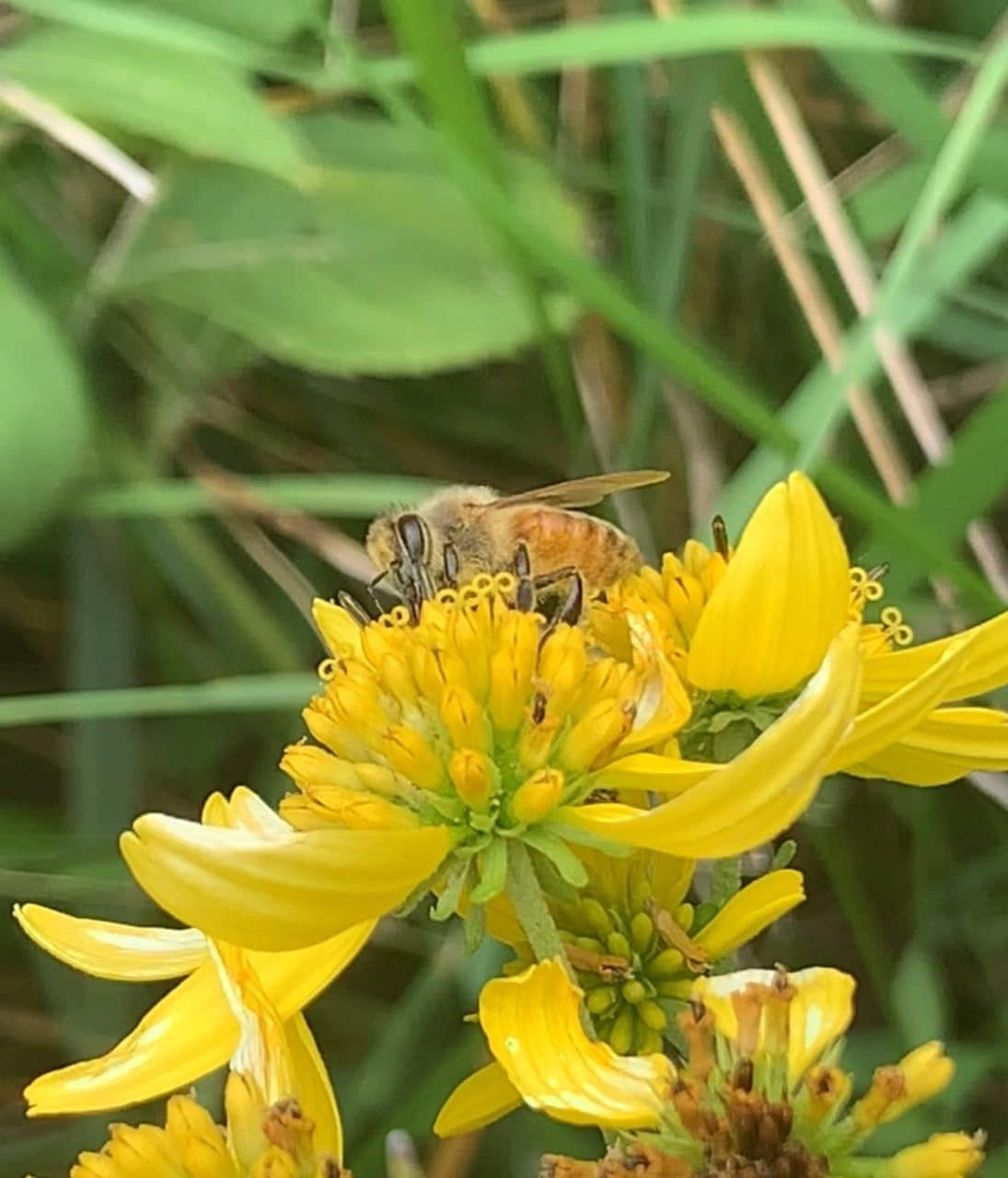An image of a bee on a flower