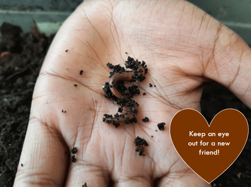 An image of a hand holding dirt and worms