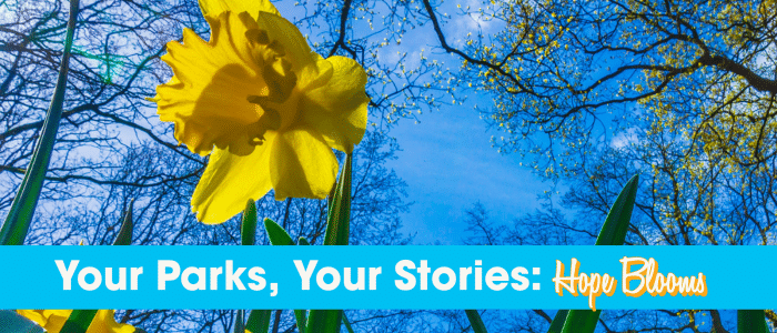 Hope Blooms header with daffodils