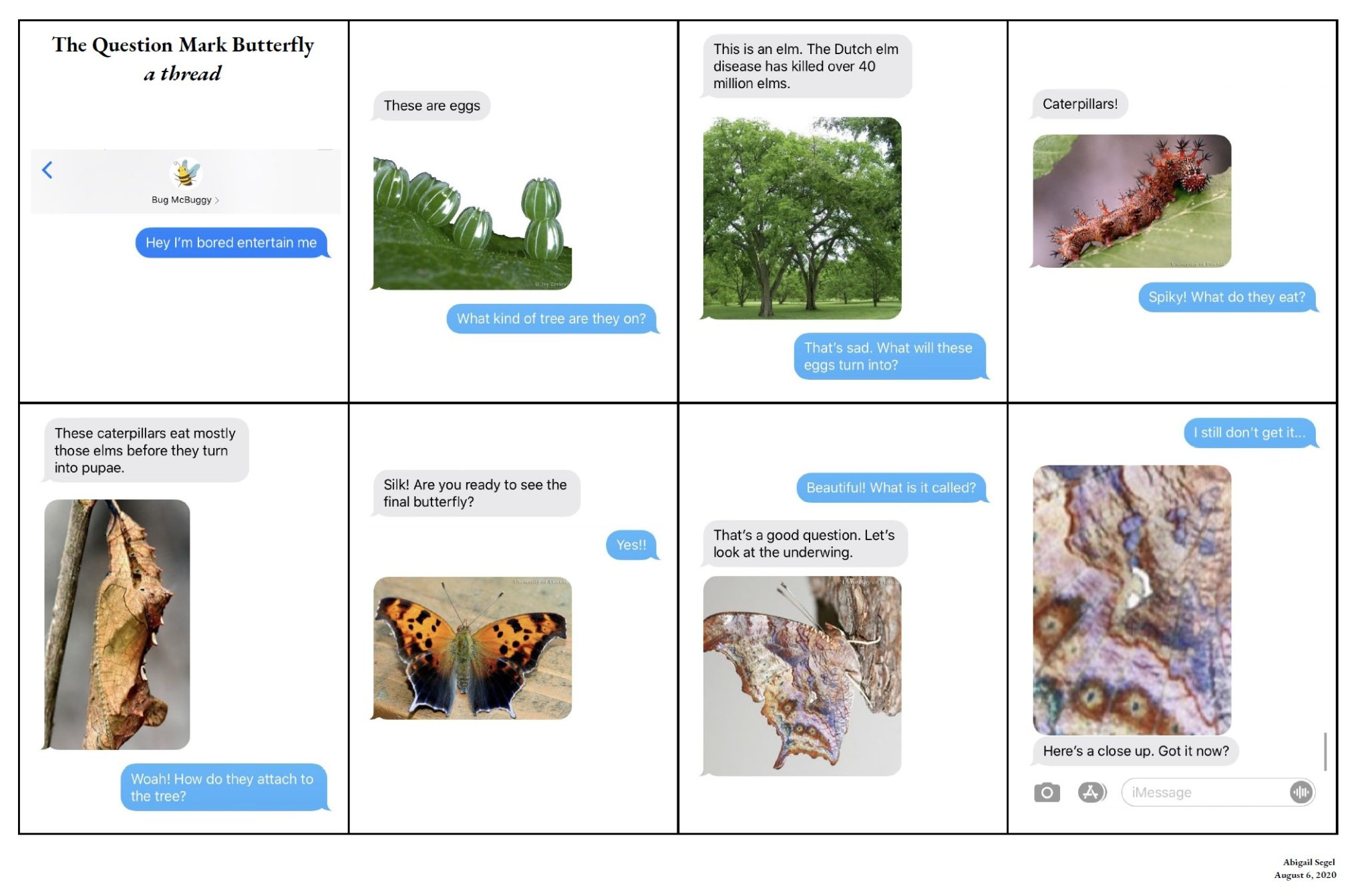 Question Mark Butterfly Text Conversations