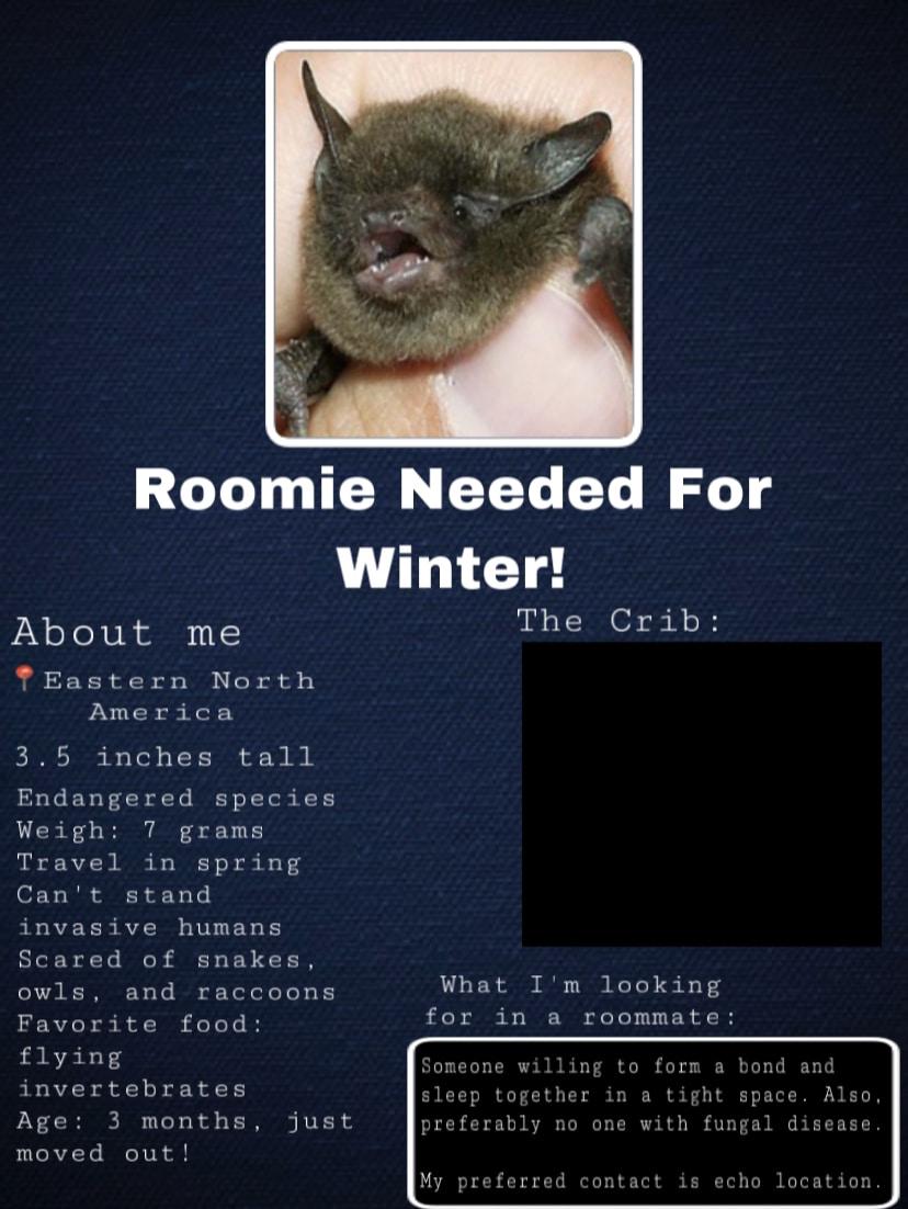 Craigslist ad for bat