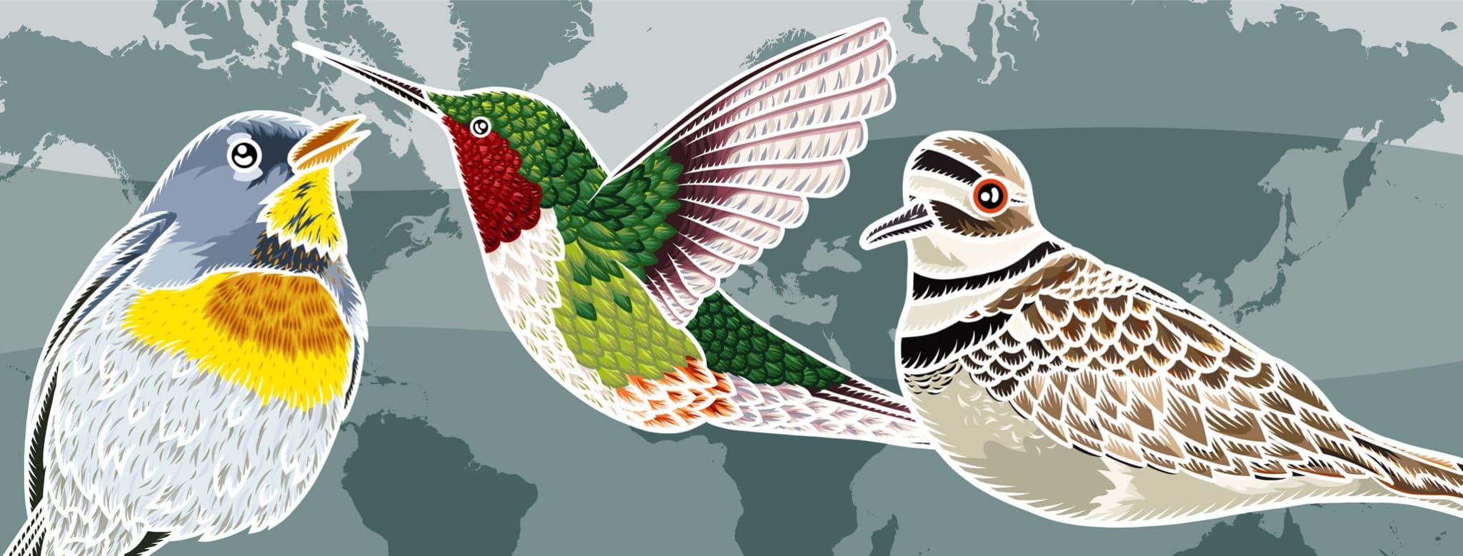 Three cartoon birds among a background of the world map