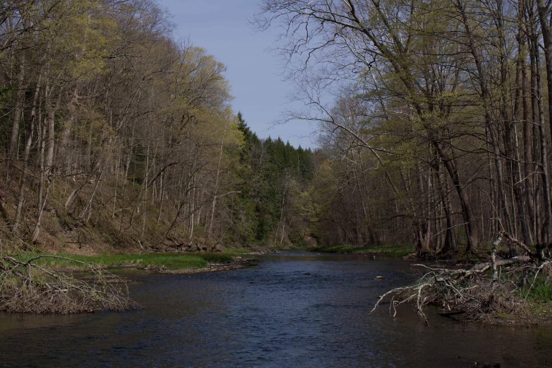 Image of stream
