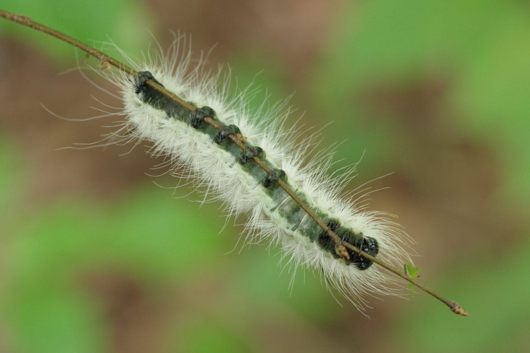Close up of a caterpillar