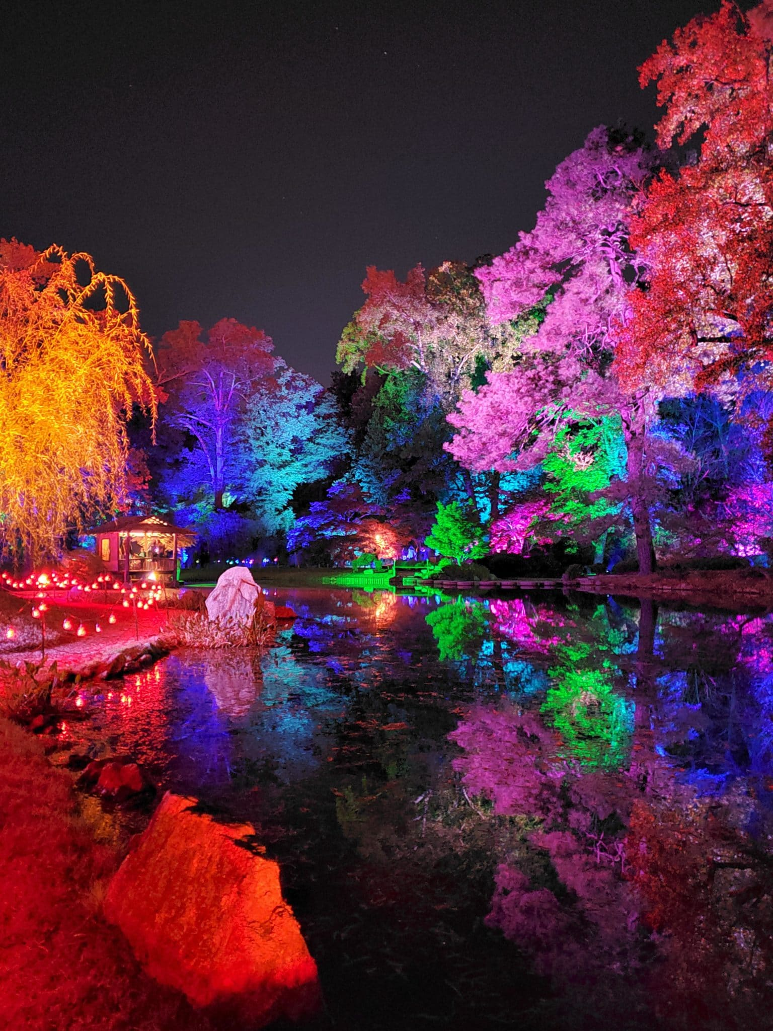 Trees lit in vibrant colors in the evening.
