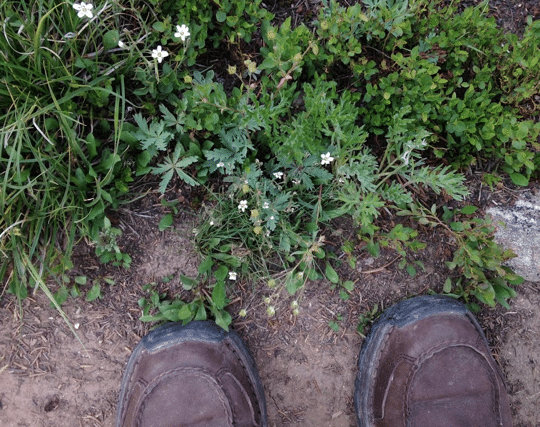 hiking shoes with plants
