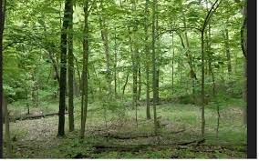 image of woods in the summer
