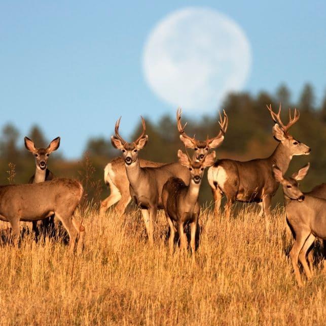 several deer in a field