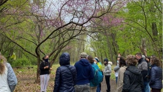 Socially distanced foraging hike in Frick Park
