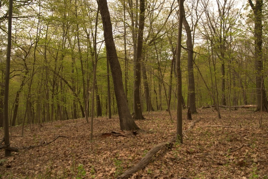 mature forest in Frick Park