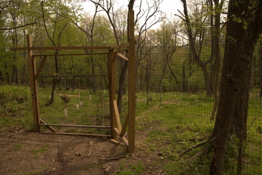 deer enclosure near clayton hill