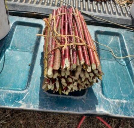 Bundled live stakes