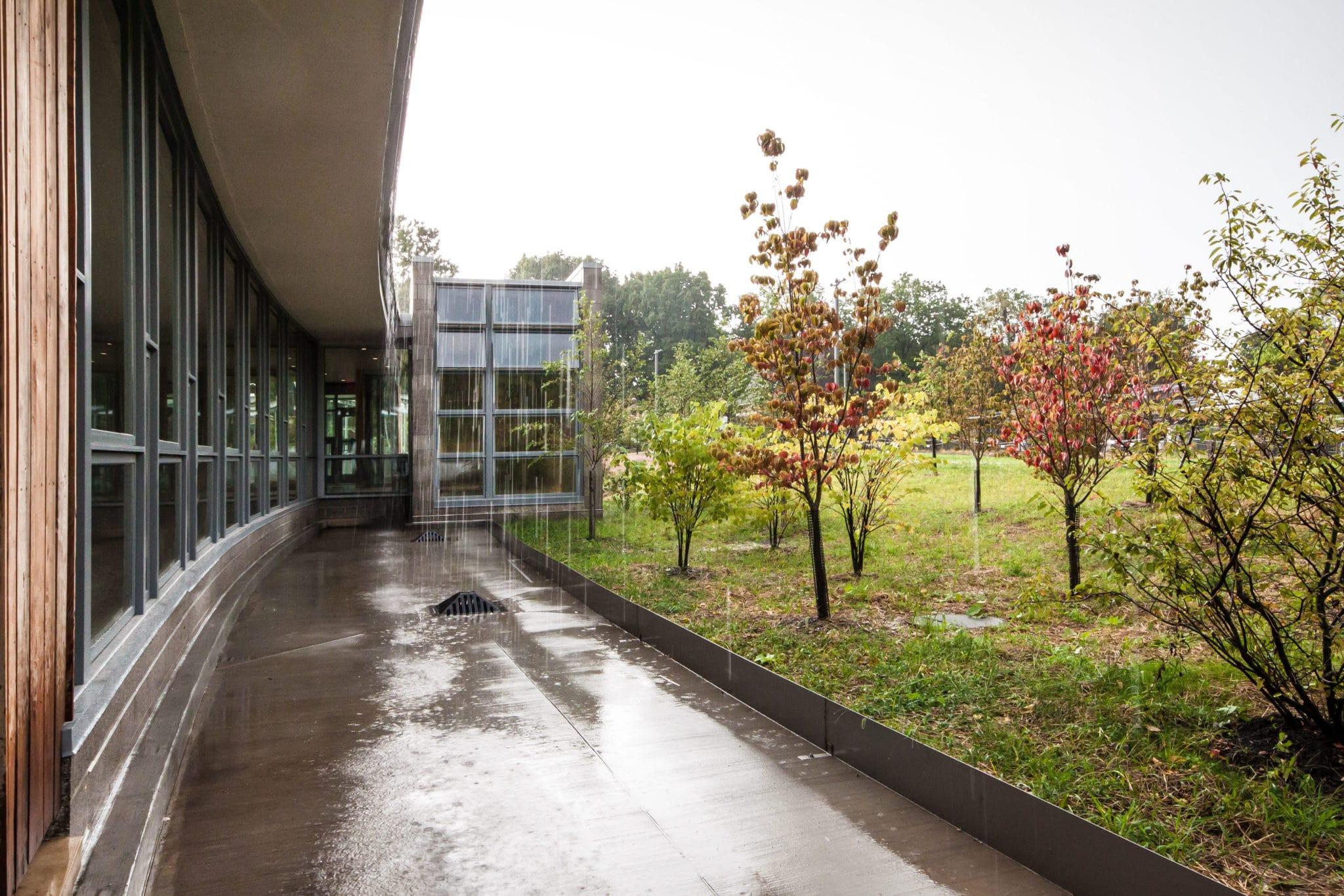Rain ravine at the Frick Environmental Center