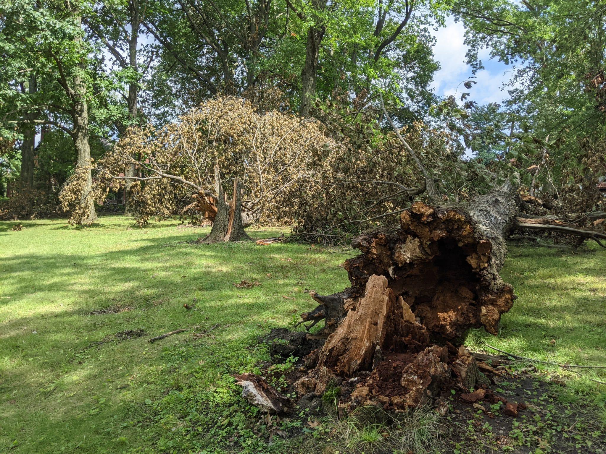 A fallen tree in a park.