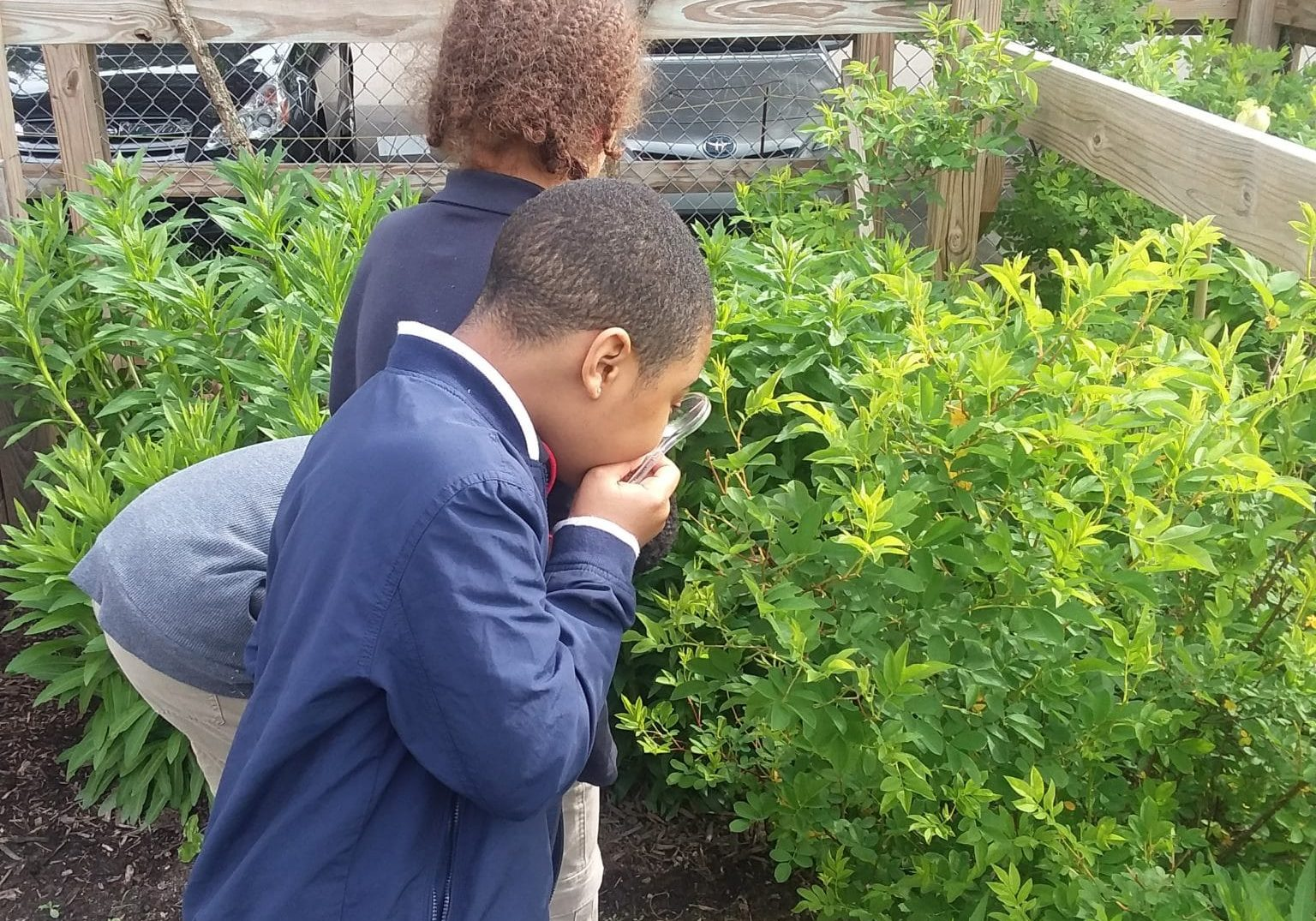From Slavery To Freedom Garden 2019 Urban Pathways Fourth Grade Students Plants Magnifiers Observing Exploring 2